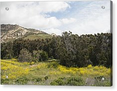 California Hillside View IIi Acrylic Print