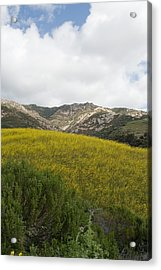 California Hillside View V Acrylic Print