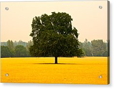 California Oak Acrylic Print