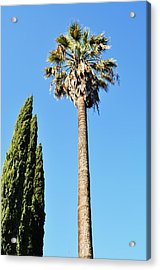 California Palm Acrylic Print by Todd Sherlock