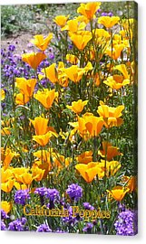 Acrylic Print featuring the photograph California Poppies by Carla Parris