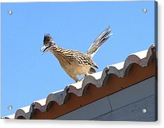 Acrylic Print featuring the photograph California Roadrunner by Carla Parris