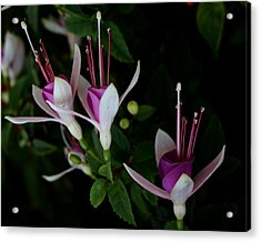 Acrylic Print featuring the photograph California Trio by Karen Harrison