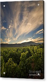 California Vineyard Sunset Acrylic Print by Matt Tilghman