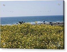 California Wildflowers Acrylic Print by Daniel  Knighton