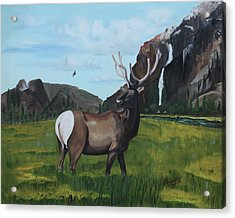 Call Of Nature Acrylic Print by Carolyn Ardolino