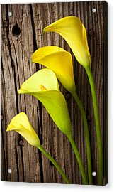 Calla Lilies Against Wooden Wall Acrylic Print by Garry Gay