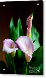 Acrylic Print featuring the photograph Calla Lily by Barbara McMahon