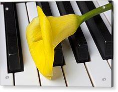 Calla Lily On Keyboard Acrylic Print by Garry Gay
