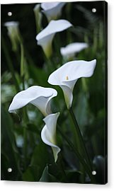 Calla Lily Sea Acrylic Print by Chris Anderson