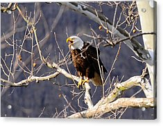 Acrylic Print featuring the photograph Calling For His Mate by Randall Branham