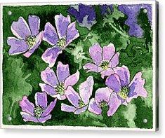 Callirhoe Acrylic Print by Eunice Olson