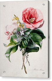 Camellia And Broom Acrylic Print by Marie-Anne