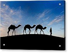 Camels - 3 Acrylic Print by Okan YILMAZ