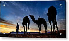 Camels  Acrylic Print by Okan YILMAZ