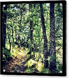 Camino Sanabrés #instagram #sanabria Acrylic Print