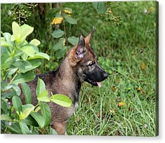 Camouflage Puppy Acrylic Print by Christean Ramage