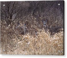Camouflaged Deer Acrylic Print by Christy Woods