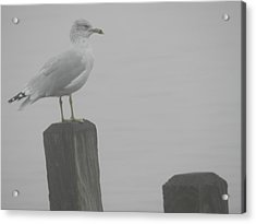 Camouflaged Seagull Acrylic Print by Dennis Leatherman