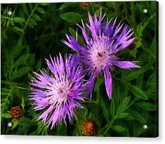 Acrylic Print featuring the photograph Can Flowers Say Boo by Steve Taylor