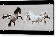 Acrylic Print featuring the photograph Can We Do This by Rima Biswas