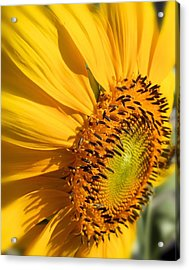 Acrylic Print featuring the photograph Can You Say Sunshine by Lynnette Johns