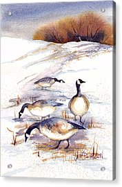 Canada Geese In Stubble Field Acrylic Print by Peggy Wilson