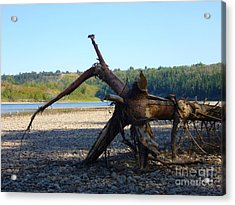 Acrylic Print featuring the photograph Canadian Driftwood by Jim Sauchyn