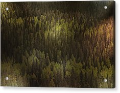 Canadian Forest - The Woods Are Lovely Dark And Deep Acrylic Print