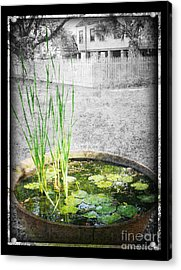 Acrylic Print featuring the photograph Cane Pot And Water Lily by Jeanne  Woods