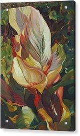 Canna In Light Acrylic Print by Elizabeth Taft