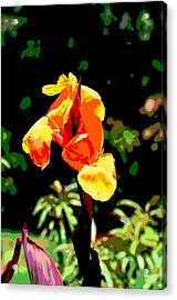 Canna In Summer Acrylic Print by Dorrie Pelzer