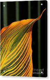 Acrylic Print featuring the photograph Canna Leaf by Nareeta Martin