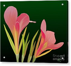 Acrylic Print featuring the painting Canna Lilly Whimsy by Rand Herron