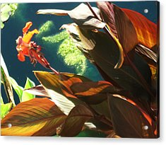 Canna Lily And Water In San Angelo Civic League Park Acrylic Print
