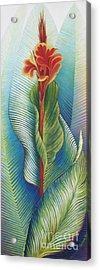 Canna Striata Acrylic Print