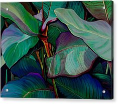 Cannas II Up-close And Personal Acrylic Print by Susan  Brasch