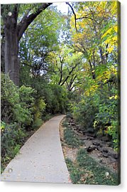 Acrylic Print featuring the photograph Canopy Walkway by Lynnette Johns