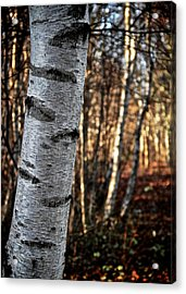 Can't See The Forest For The Tree Acrylic Print by Odd Jeppesen