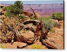 Acrylic Print featuring the photograph Canyonlands 2 by Dany Lison