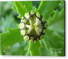 Acrylic Print featuring the photograph Capable by Tina Marie