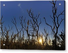 Cape Cod Marsh At Sunset Acrylic Print by Marianne Campolongo
