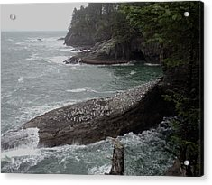 Cape Flattery Shoreline Acrylic Print by Fred Russell