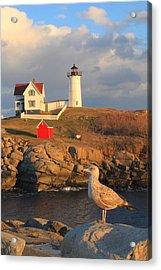 Cape Neddick Nubble Lighthouse And Seagull Acrylic Print by John Burk