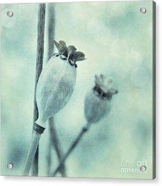 Capsule Series Acrylic Print by Priska Wettstein