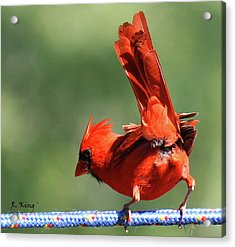 Cardinal-a Picture Is Worth A Thousand Words Acrylic Print by Roena King
