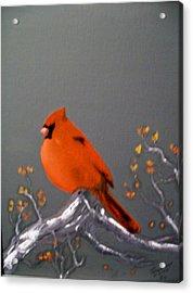 Cardinal Acrylic Print by Al  Johannessen