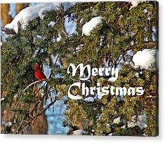 Cardinal Christmas Card Acrylic Print by Aimee L Maher Photography and Art Visit ALMGallerydotcom