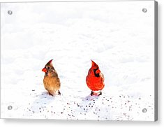 Cardinal Couple II Acrylic Print by Tamyra Ayles