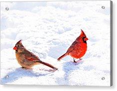 Cardinal Couple Acrylic Print by Tamyra Ayles